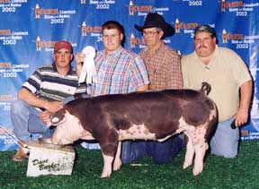 2002 Houston Stock Show3rd Place heavy weight Spot