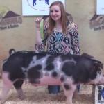 2014 Show Pig Winners