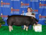 2010 Show Pig Winners